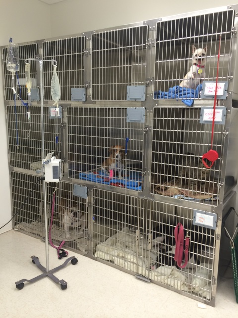 Dogs in cages at Merritt Animal Hospital