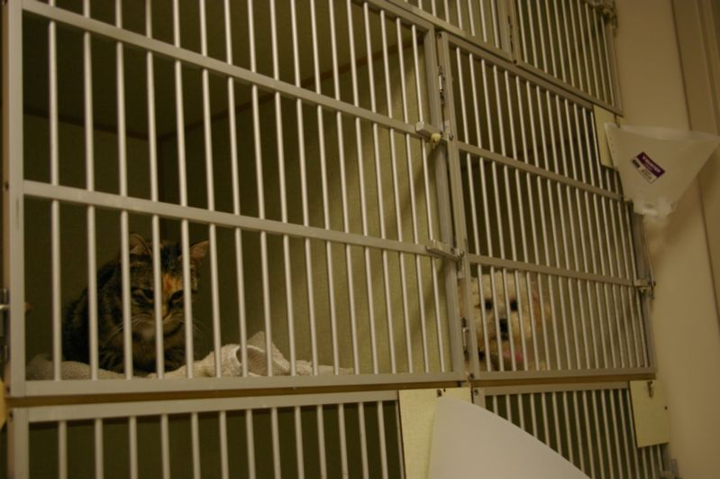 Cat and dog in cages at Merritt Animal Hospital