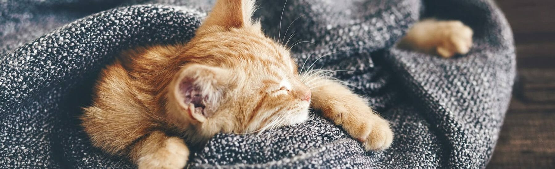 Small Ginger Kitten Sleeping in a pile of blankets